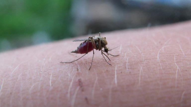 Czy istnieje skuteczna metoda do pozbycia się komarów ze swojego ogródka?